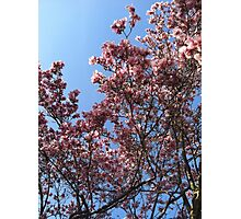 A magnolia in Red Hook Photographic Print