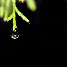 Raindrop [iPhone - iPod Case] by aprilann