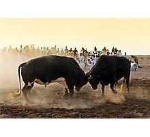 Bullfight Photographic Print
