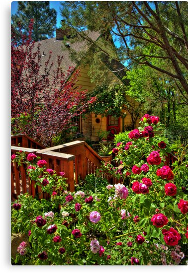 Cottage Rose Garden by K D Graves Photography
