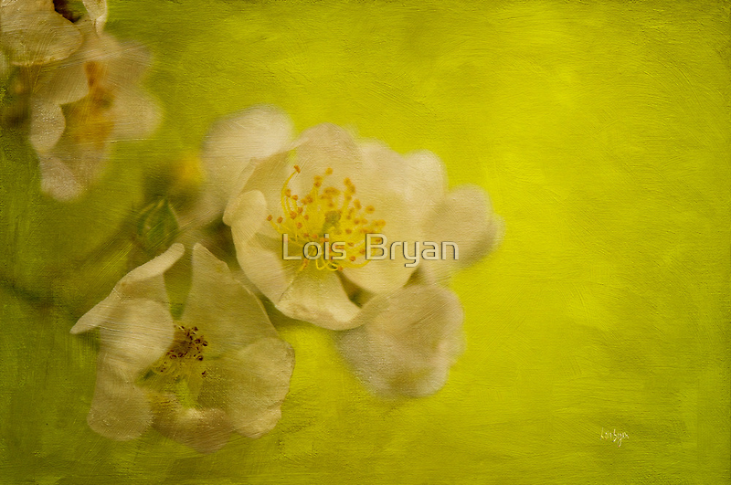 My Sweet Wild Rose by Lois  Bryan
