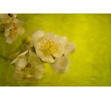 My Sweet Wild Rose Photographic Print