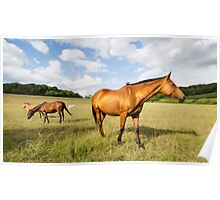 Light Bay Horse Poster