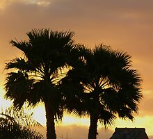Two Palm Trees in the Sunset by KUJO-Photo