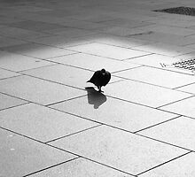 Chasing his own shadow by MatthewMPhotos
