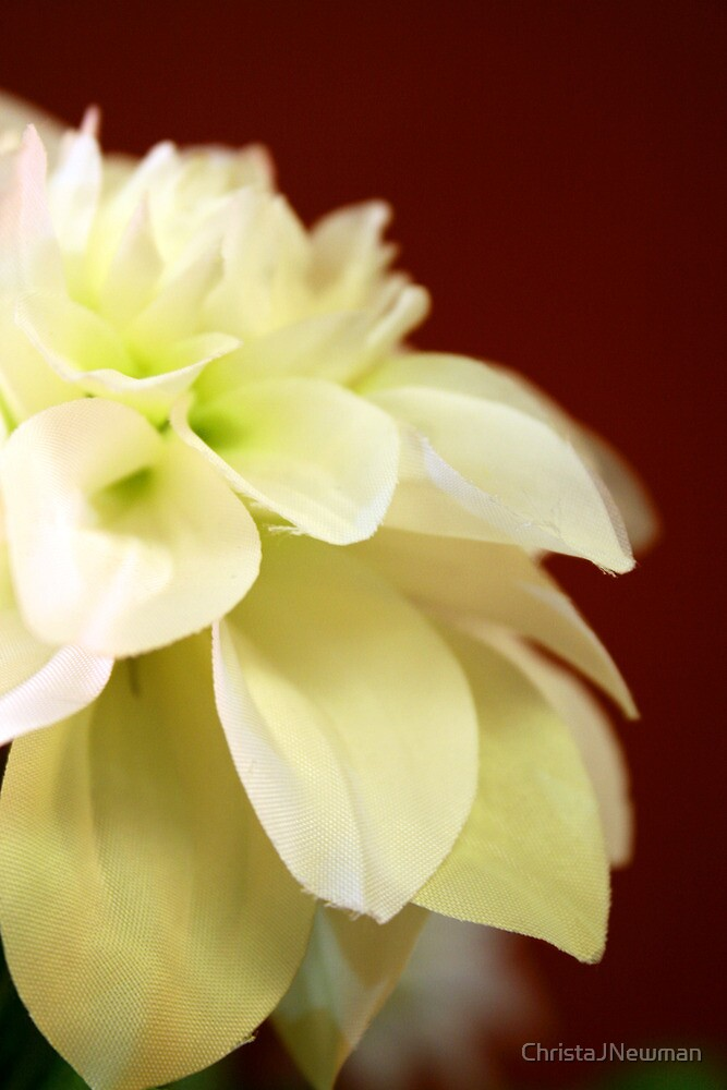 Blooming Flower by ChristaJNewman