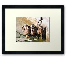 A Perch for Three Framed Print