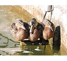 A Perch for Three Photographic Print