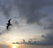 Evening Flight, Brighton by KUJO-Photo