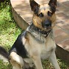 Handsome Pascha, born May 2005 in Lilongwe by Anita Deppe