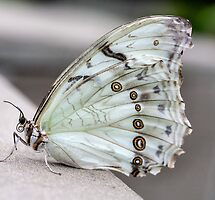 Featured in Insects, Bugs and Creepy Crawlies – 2 July 2012
