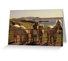 Barra Horses Greeting Card