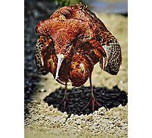 A very odd bird ! Photographic Print