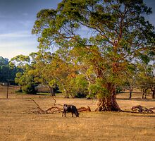 Woodside III, Adelaide Hills, SA by Mark Richards
