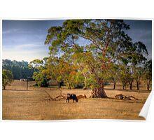 Woodside III, Adelaide Hills, SA Poster