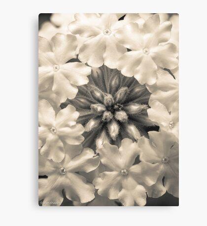 Monochrome Flora Canvas Print