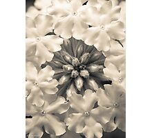 Monochrome Flora Photographic Print