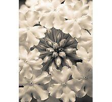 Monochrome Flora Photographic Print