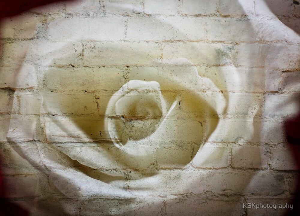 White rose brick texture by KSKphotography