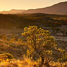 Larapinta Sunset by Dieter Tracey
