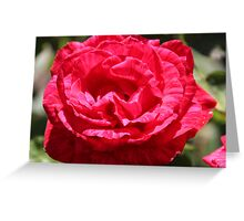 Roses - Pink Perfection Greeting Card