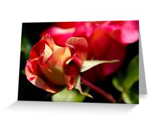 Roses - Bud Beauty Greeting Card