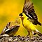APRIL AVATAR ~ Our Feathered Friends