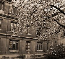 Clare College Cambridge by Magdalena Warmuz-Dent