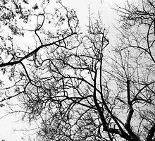 Natural neurons by geooorge