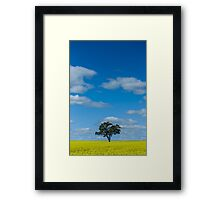 Lone tree in a field of canola Framed Print