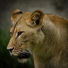 Lioness by vasu