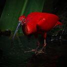 Scarlet by vasu