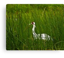 Nesting Whooping Crane Canvas Print