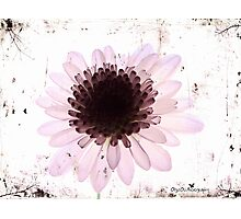 Floral virtue Photographic Print