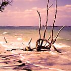 Driftwood by the Sea by Rosalie Scanlon