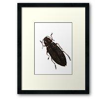 Texania - Jewel Beetle Framed Print
