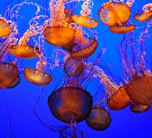 Jellyfish Mess by Agro Films