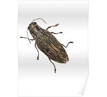 Spectralia - Jewel Beetle Poster