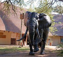 BEAUTIFUL ELEPHANT STATUE - The Kruger National Park by Magriet Meintjes