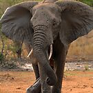 Ya wanna dance? by Explorations Africa Dan MacKenzie
