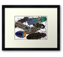 Jewel Beetle Crowd Framed Print
