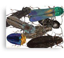 Jewel Beetle Crowd Canvas Print