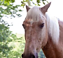 The Horse Next Door by Sherry Hallemeier