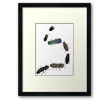 Jewel Beetle Parade Framed Print