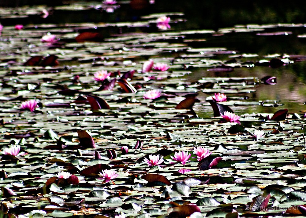 Pink Lillies by Sherry Hallemeier