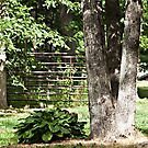 Tree Trunks and Hosta by Sherry Hallemeier