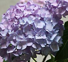 Beautiful Pink and Blue by Sherry Hallemeier