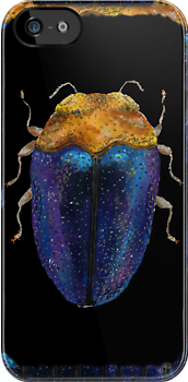 Jewel Beetle iPhone Case by Glendon Mellow