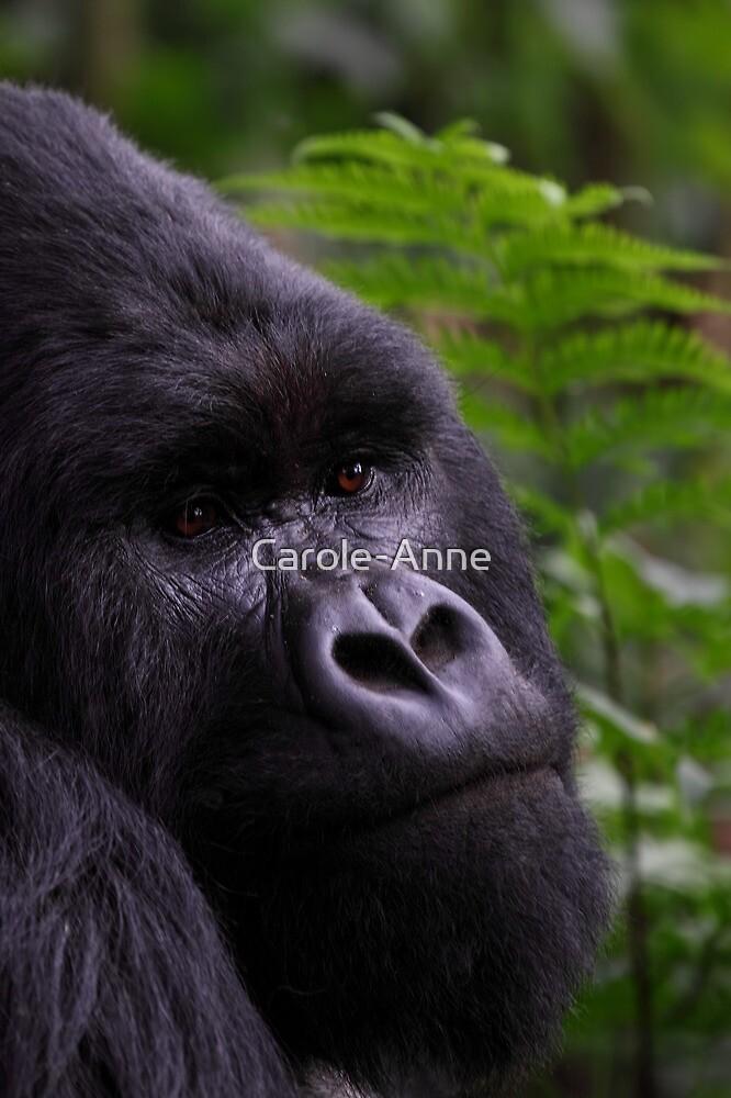 Mountain Gorilla Portrait by Carole-Anne