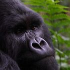 Mountain Gorilla Portrait by Carole-Anne